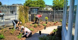 Now growing - new front garden