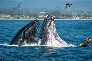alan_brady_whales