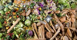 How the US can solve food waste problem
