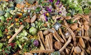food_waste_2